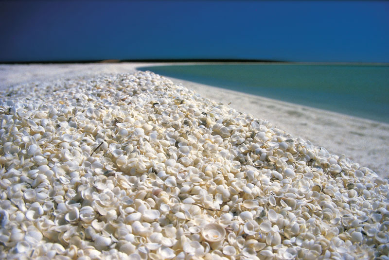 TWA-ShellBeach-located-near-Denham 800